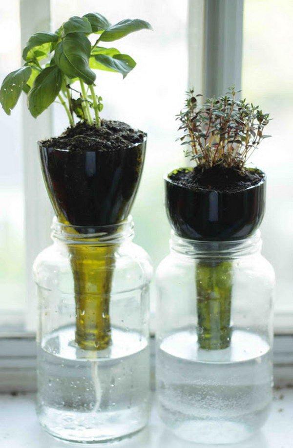 растения в бутылке