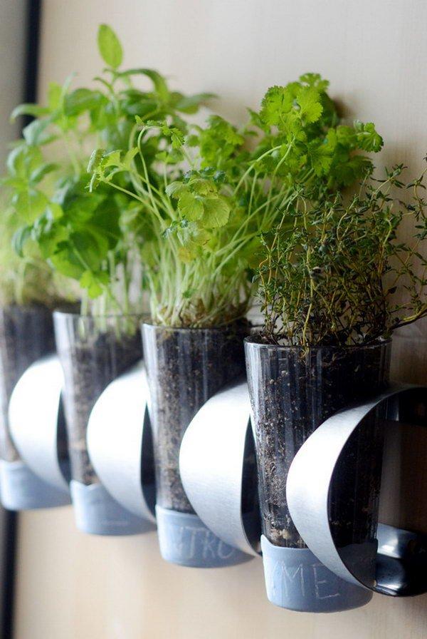идеи размещения растений