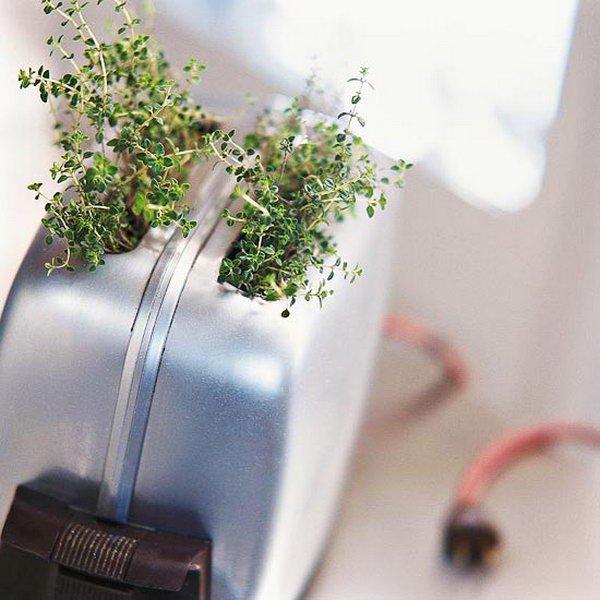 дизайн домашних растений