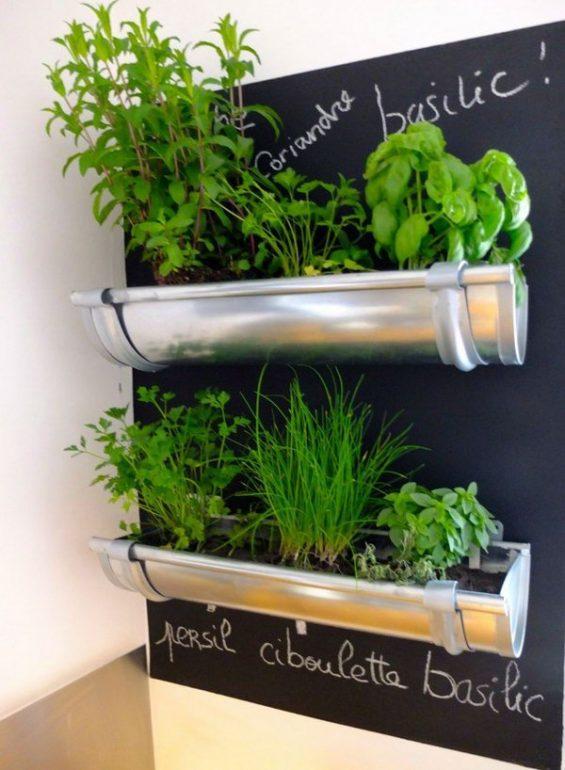 растения на стене