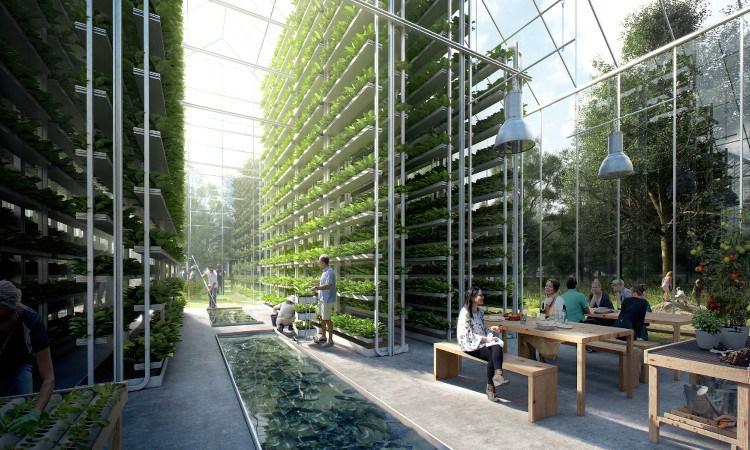 вертикальная система выращивания овощей в экопоселении